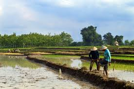 Farmers, why farmers, when is farmers day,