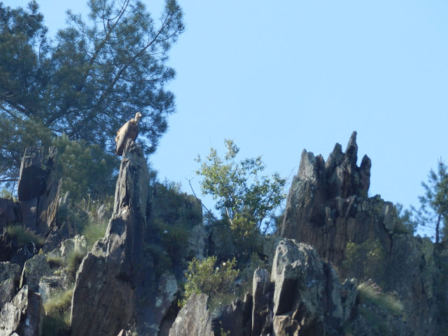 Parque Natural Sierra Norte de Guadalajara