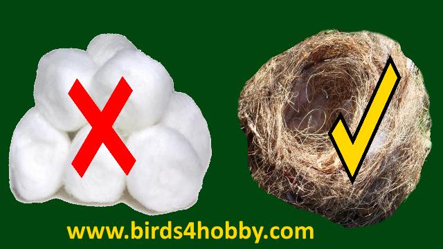 القطن خطورته على الطيور في موسم التزاوج