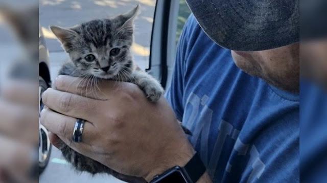 Мужчина провёл 2 дня, спасая котёнка, а впереди их ждало воссоединение с 8 другими котятами