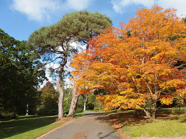 Spectacular specimen trees at Exbury gardens