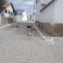 ASSUNÇÃO: Quantidade de cães perambulando pelas ruas é preocupante