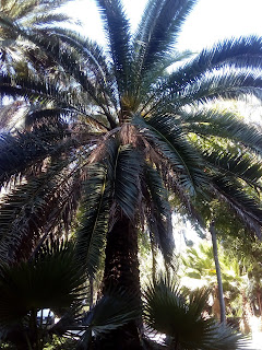 Si os gustan las palmeras, visitad Elche