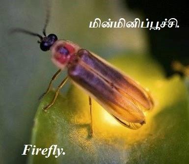 மின்மினிப்பூச்சி - Firefly - Part 3.
