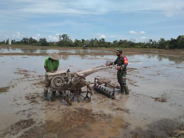 Beri Motivasi Pada Petani, Babinsa Koramil Penajam Turun Langsung Ke Sawah
