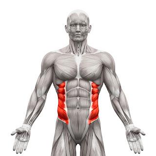 External oblique sterke core buikvet verliezen