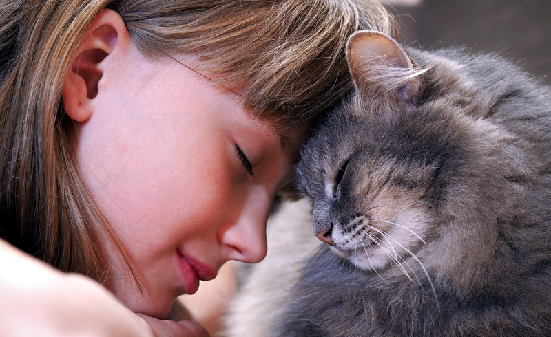 What to Do If Your Pet Doesn't Like You