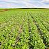 Publicação da Embrapa mostra que soja brasileira tem tecnologia para aumento de produção sem pressão por áreas de florestas