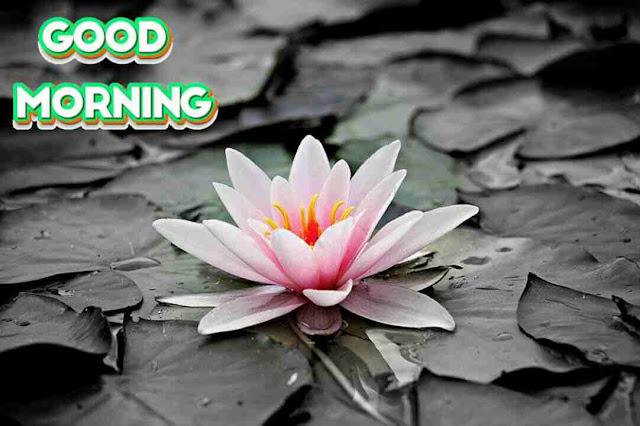 beautiful good morning image of nature flower
