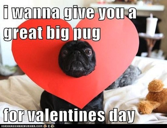 Happy Valentines Day Memes Funny 2017 For Singles