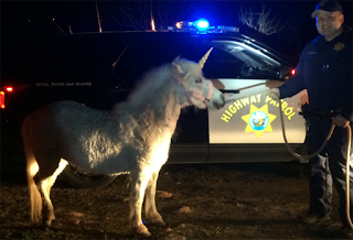 http://www.khq.com/story/31321476/unicorn-leads-police-on-crazy-chase-through-traffic