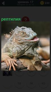 Рептилия с открытой пастью сидит на ветке