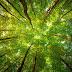 जानें पेड़ों के बारे में 8 अनजान बातें, खोने पर रास्ता भी दिखाते हैं