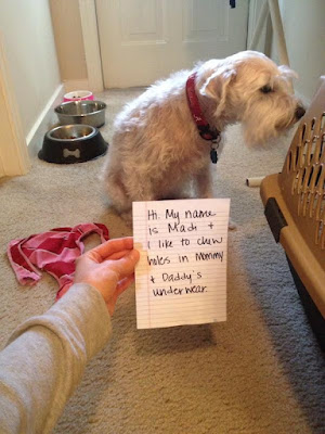 Funny Dog Shaming : sorry about your underwear