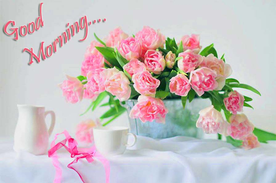 Good Morning Beautiful Pink Roses : Lovely and beautiful good morning wallpapers