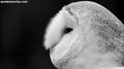 Free best wallpaper owl