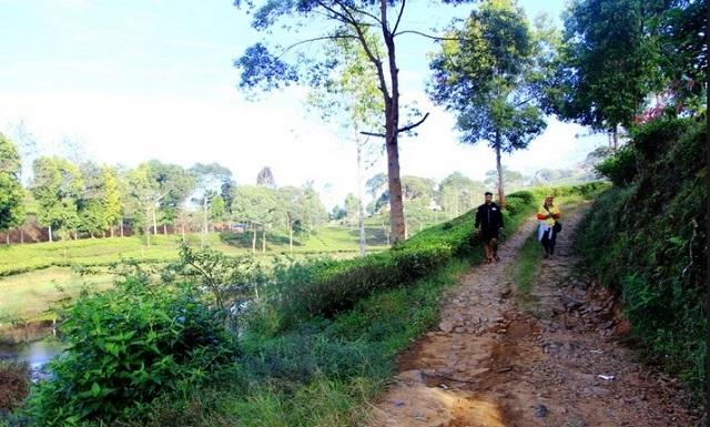 Jalan menuju Situ Cukul