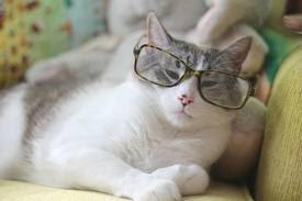 صور مضحكة للقطط
