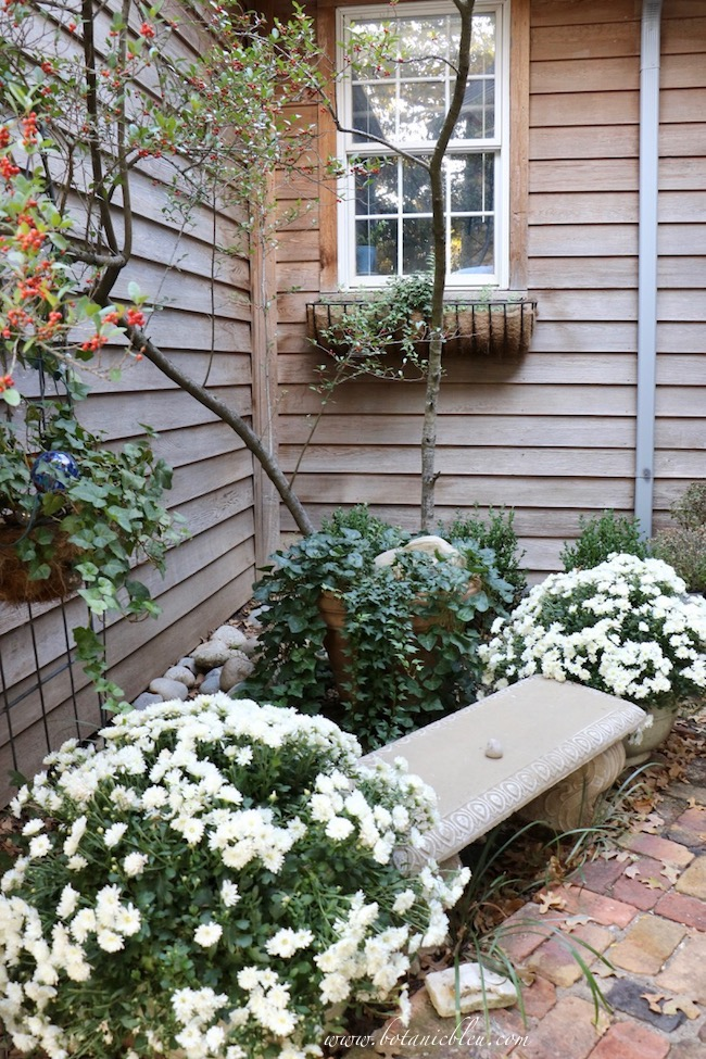 Fall Front Entry Garden With White Chrysanthemums