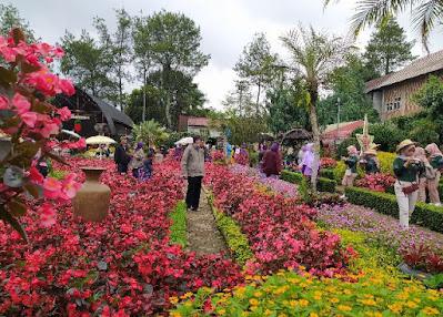 area foto taman begonia