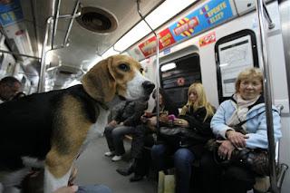 Es ley: Las mascotas podrán viajar en subte