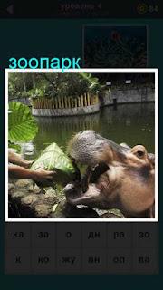 в зоопарке кормят животных, гиппопотам ест листья капусты 667 слов 4 уровень