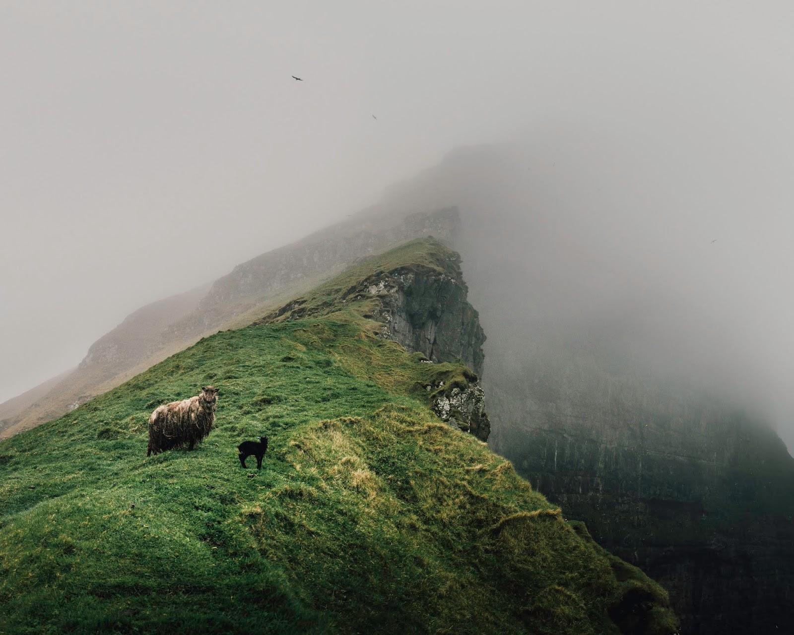 kalsoy kallur lighthouse liquidgrain liquid grain sheep faroe islands