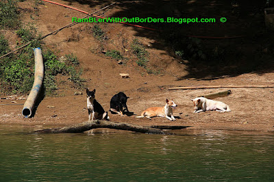 Dogs, Loboc River, Bohol, Philippines