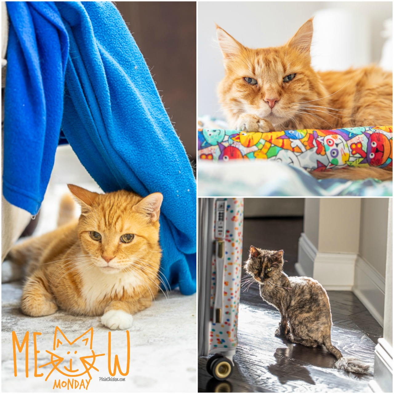 Meow Monday - pictures of cute cats to start your week! Come see what Jack, Squeaky, and Felix have been up to! #cats #cat