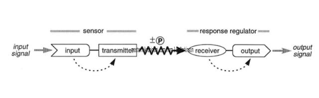 transduksi sinyal mikroorganisme