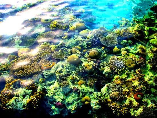 Eilat's Coral Beach