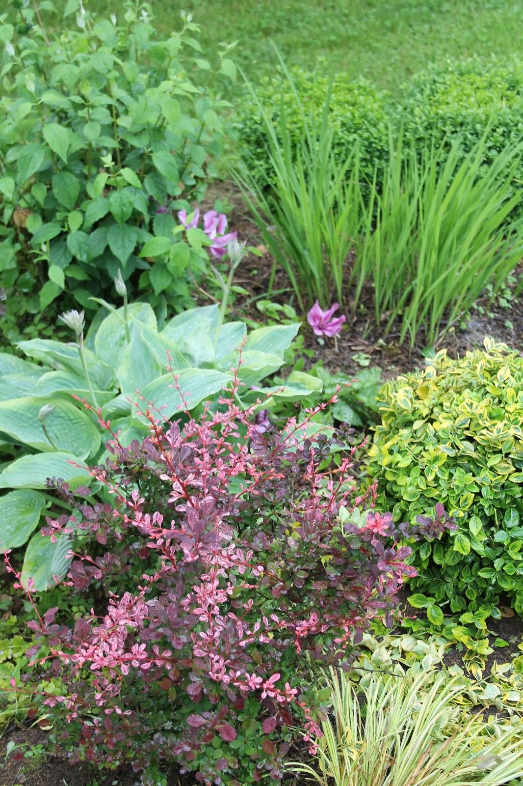 Doubs jardin petit tour au jardin 1 for Plante au jardin
