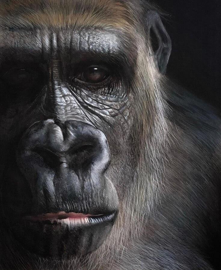 04-Silverback-Gorilla-Paul-Miller-www-designstack-co