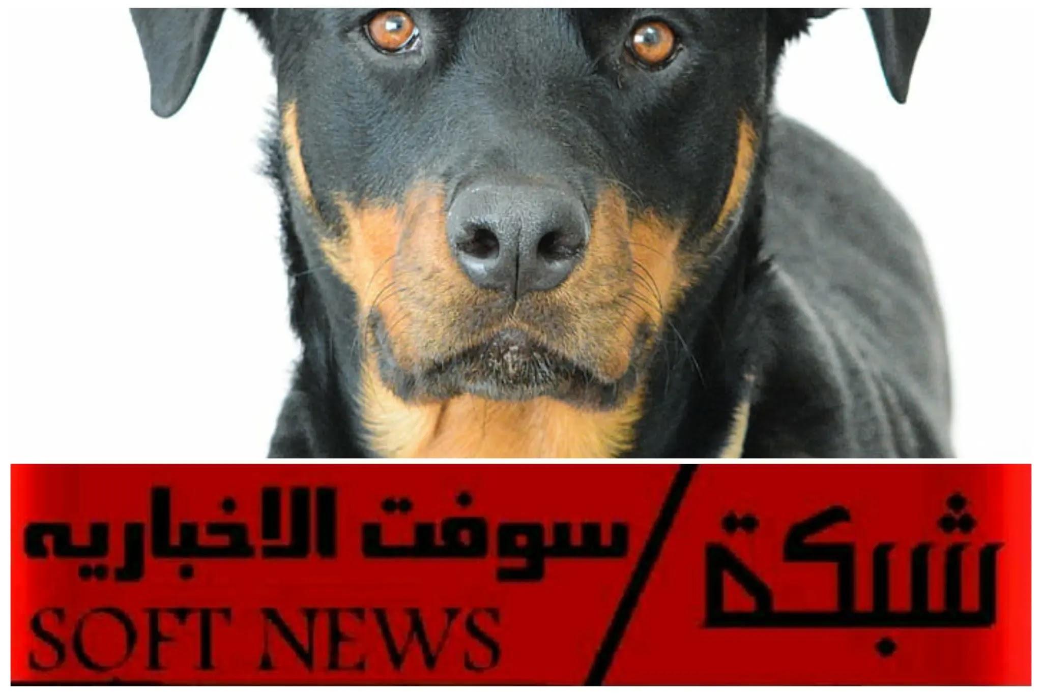 أخبار البحرين المحلية: البحرين تستخدم الكلاب للكشف عن المصابين با كوروناء