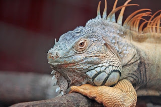 7 Contoh Hewan Reptil Ciri-ciri Ordo dan Pengertiannya Lengkap