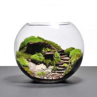 Terrarium Rainforest