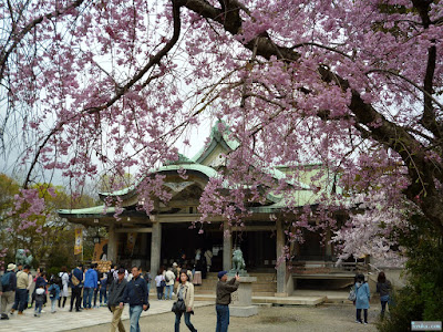 枝垂桜と拝殿
