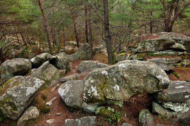 Le Long Boyau, Forêt de Fontainebleau.
