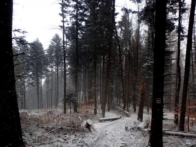 Ciecień przykryty śniegiem
