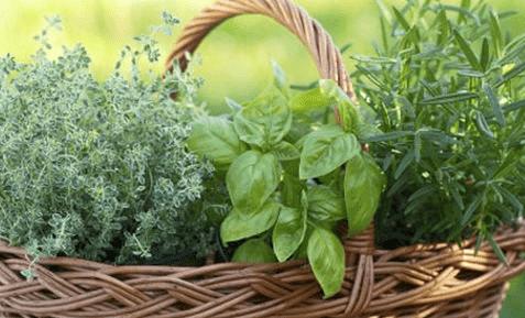 الزعتر الاخضر وفوائده الصحية للرجل والمراة