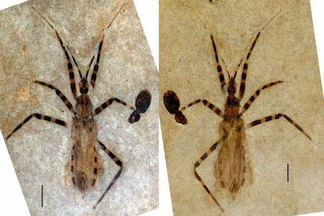 50 Million-year-old Fossil Assassin Bug Has Unusually Well-preserved Anatomy