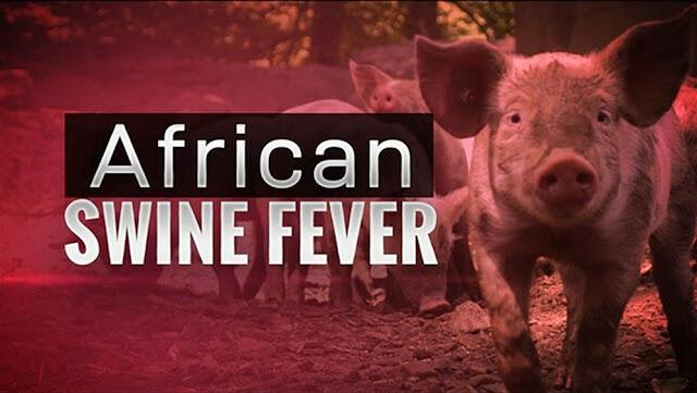 Cegah Virus ASF, Kementan Lakukan Biosekuriti Peternakan Babi