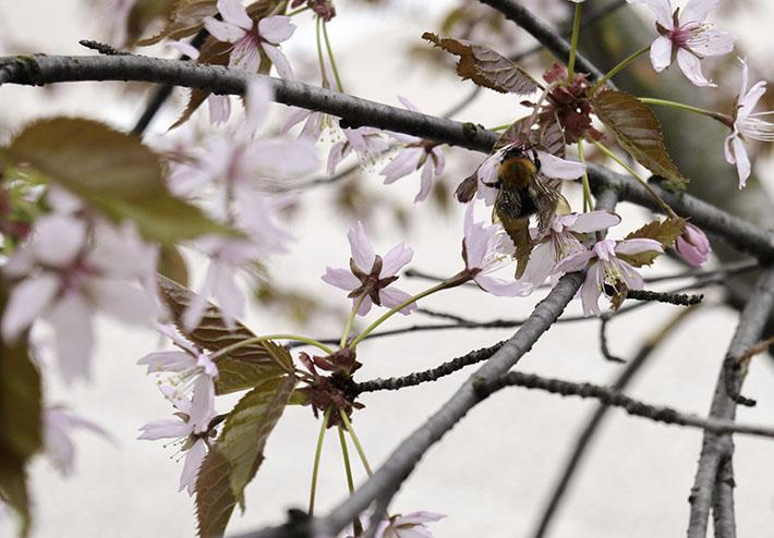 Kuulumisia, kevät, toukokuu