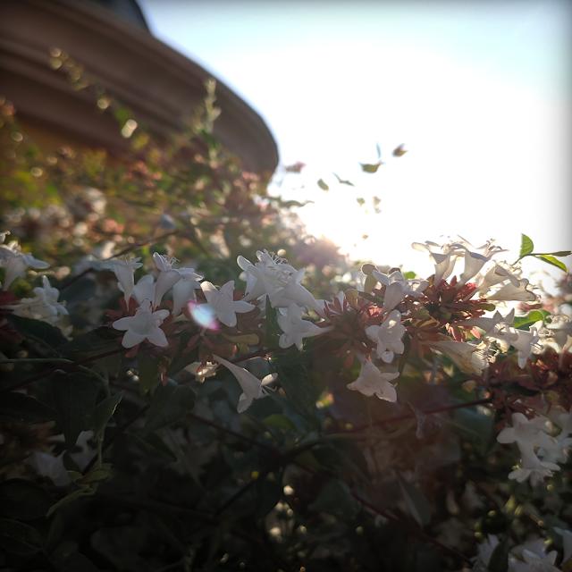 Flores blancas Madirex