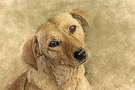 इंसान में दिखे जानवर और जानवर में दिखे इंसानियत की दो कहानियां...  (Hindi)