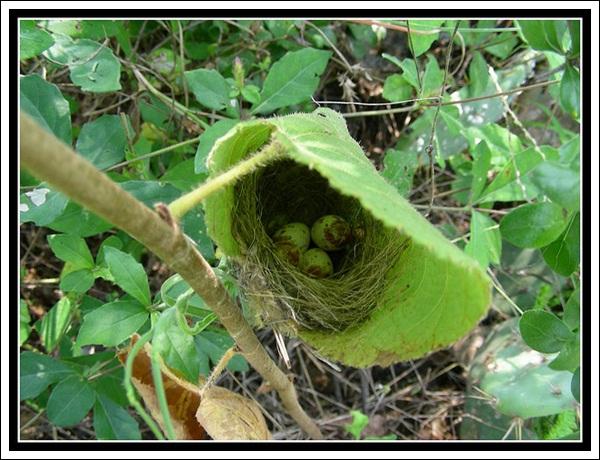 40 Beautiful Pictures Of Bird Nest Bored Art