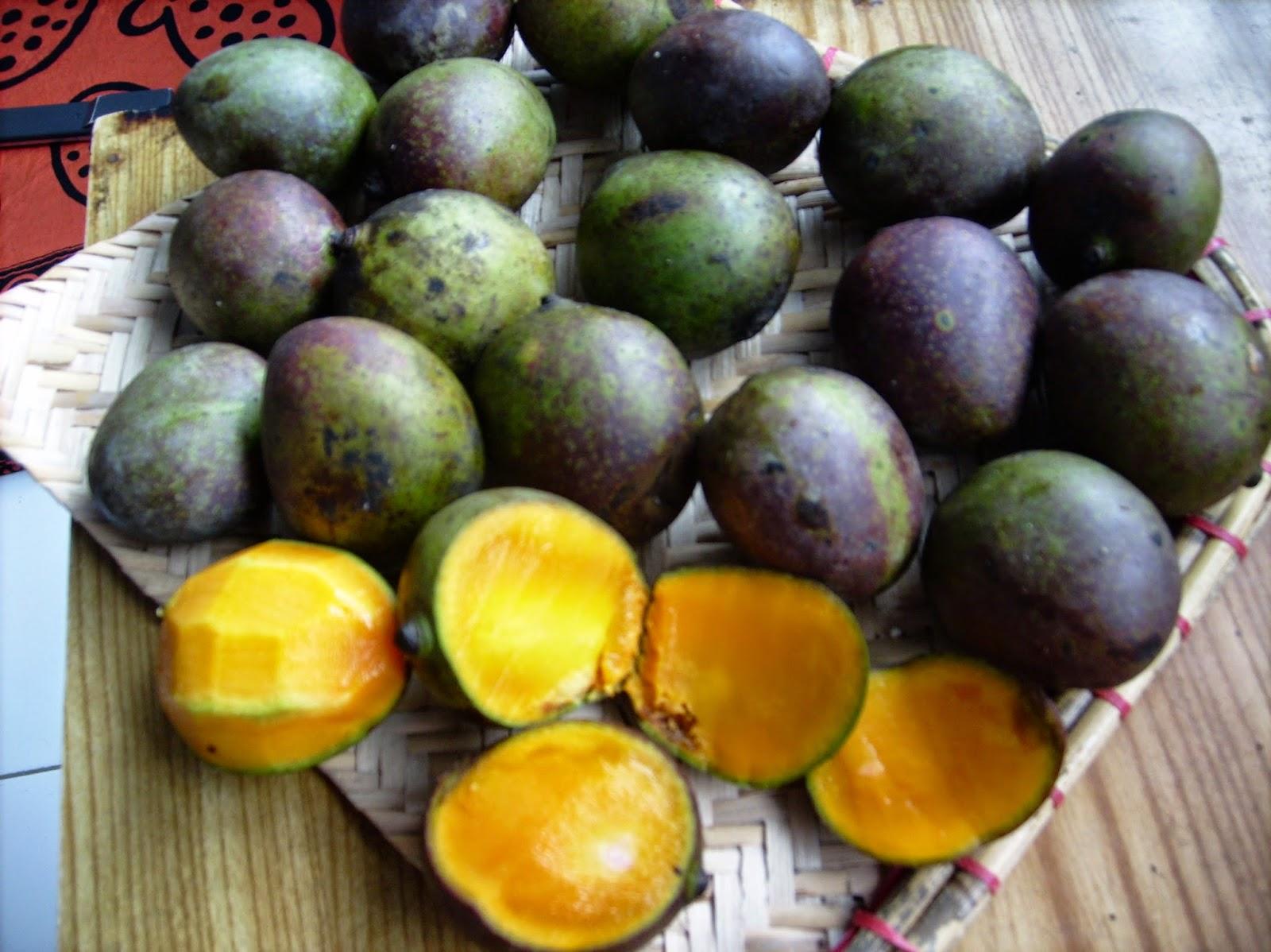 Mystery In The World Nama Pohon Tanaman Langka Indonesia
