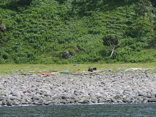 知床クルーズで見た野生の熊