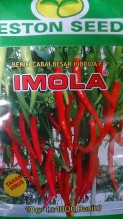Kebal Virus, Anti Virus, benih petani,tahan virus, Cabai Imola, Cabe Imola, Eston Seed, buah lebat,  tahan layu, tahan cekaman calcium, Harga murah
