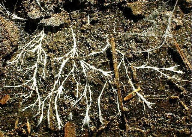 Peranan Mikroorganisme Bagi Kehidupan Tanaman